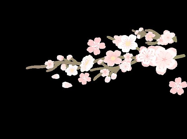 sakura middle.png