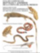 Guía_de_Campo_de_los_Reptiles_y_Anfibios