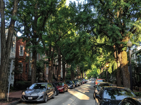When Do You Need a Permit to Remove a Tree in D.C.?