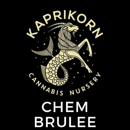 Chem Brulee