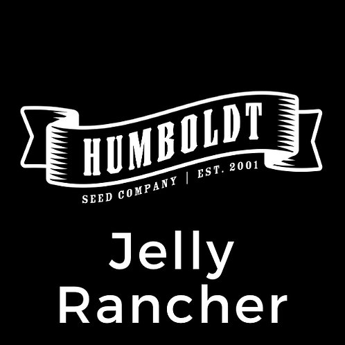 Jelly Rancher (formerly Sweet Chariot)