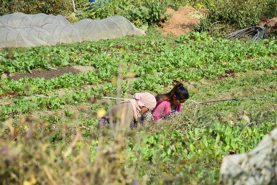 Nepal women farmer gurung