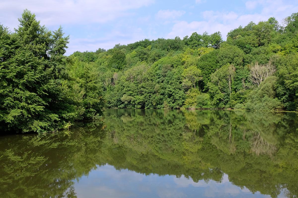 Un matin sur la Saône