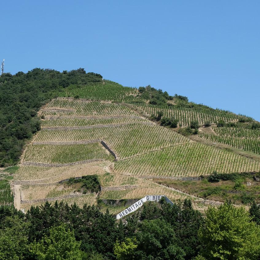 Parmi les coteaux de l'Hermitage, vignoble prestigieux de la vallée du Rhône