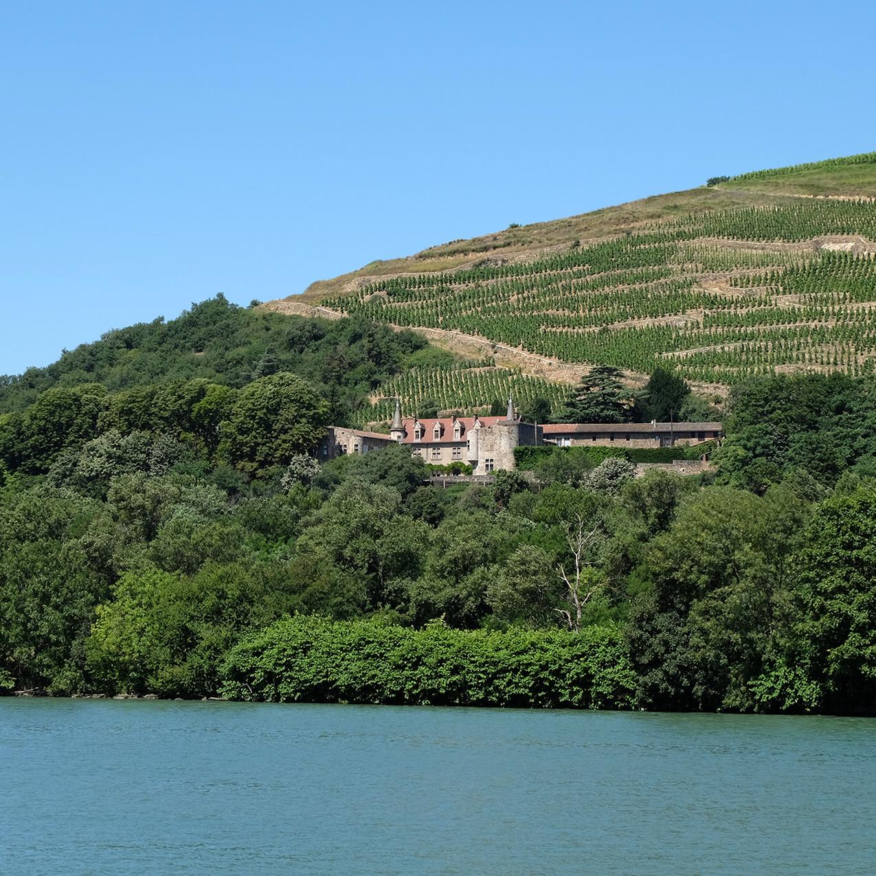 """Les vignes de """"Côtes-Rôties"""""""