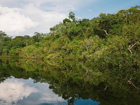 """AMAZÔNIA: """"É preciso interromper imediatamente a derrubada e queimada da floresta"""""""
