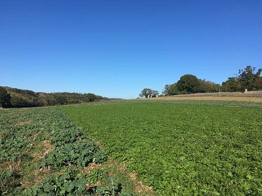 Cover crop trial.jpg