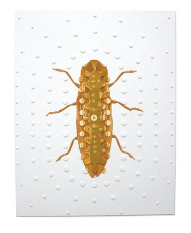 ChalcolepididiusTivogloeus