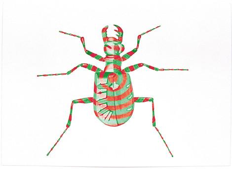Cicindela Drmartinius