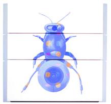 Hymenoptera Videocamerae