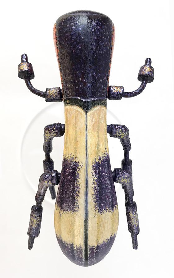 15 HybridsCSChrysochroavibratorea(L)