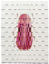 Lampyridae Clitoralvibratorae