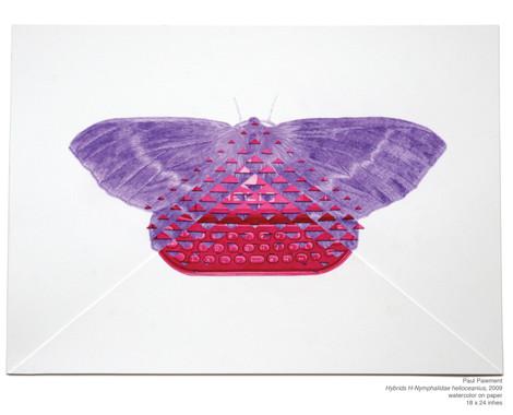 Nymphalidae helioceanius