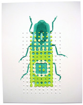 Semiotus nanois