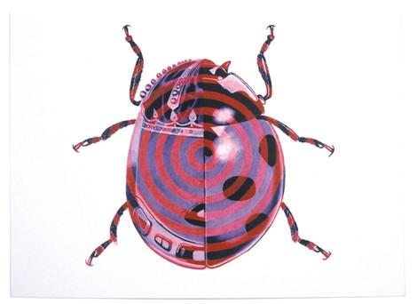Coccinella Walkmanana