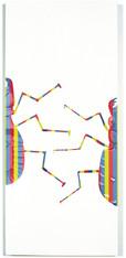 Cicindela Drmartinus