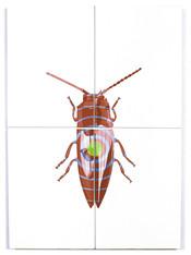Semiotus Oilcanius