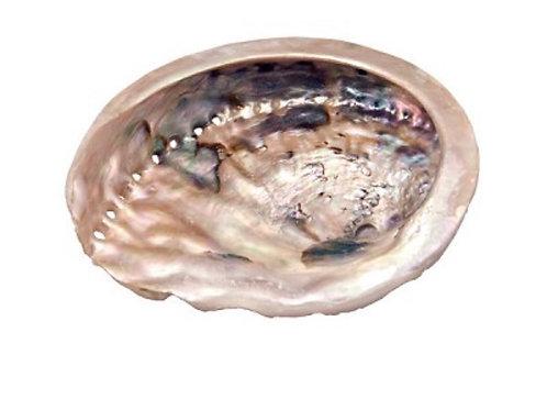 Small Abalone Shell