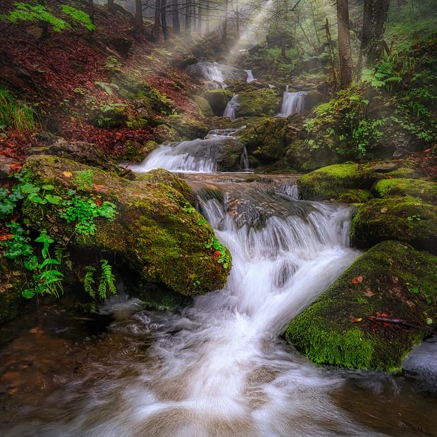 Forest in Switzerland