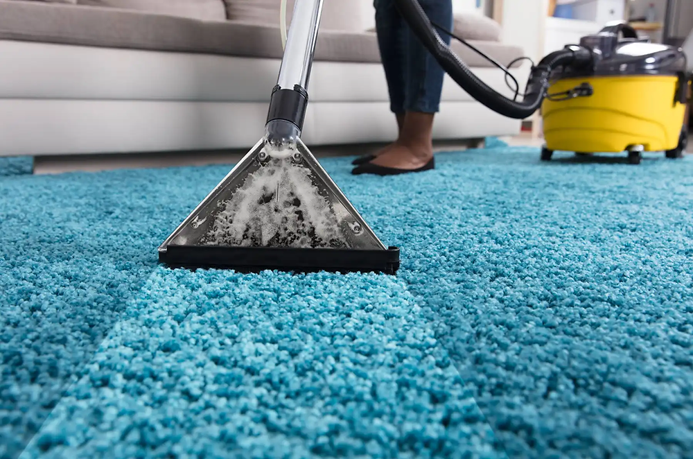 A carpet being cleaned thoroughly(PC: CLEANIPEDIA.COM)
