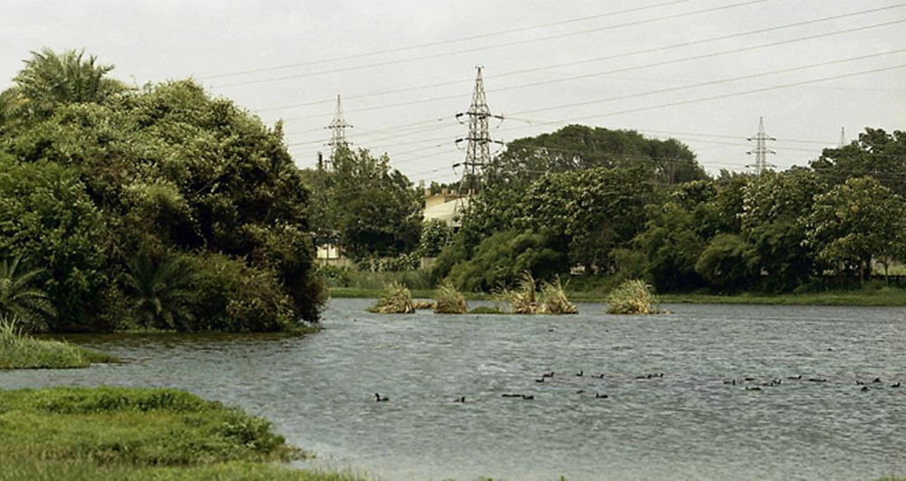 A rejuvenated clean lake in Bangalore. The summer causes peak pollution levels in the lakes in Bangalore.