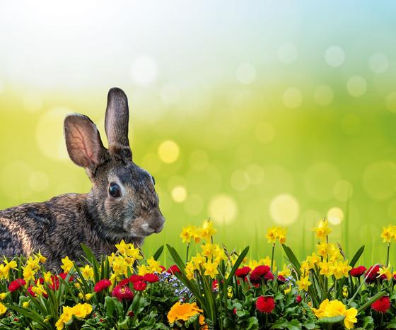 Celebrating Easter Amid the Coronavirus Crisis