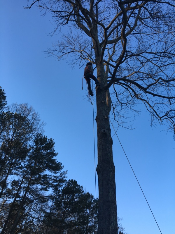 Me in Tree (for tree removal) 2016