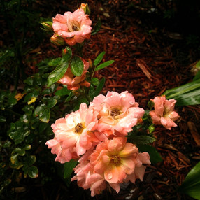 Sprinkled Pink Floral.jpg