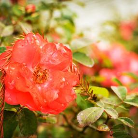 Lovely Flower (1).jpg