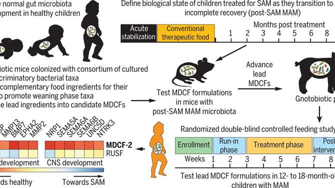 Микробиом помогает справиться с последствиями недоедания.