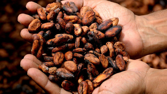 Какао нормализует реакцию на стресс