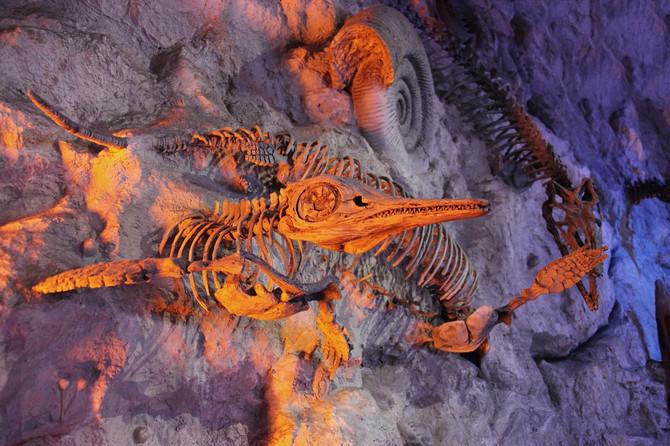 Диета протерозойского периода.