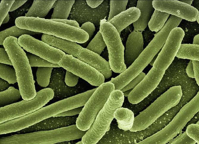 Полезная бактерия снижает риск инфаркта