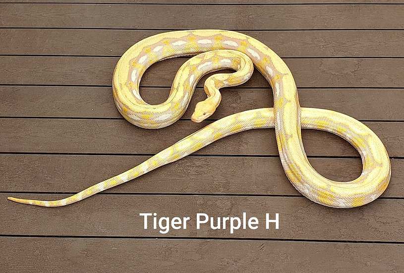 Tiger Purple H 14,700 kg