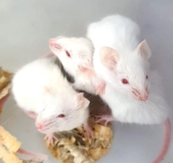 Ratón de 10g a 26g