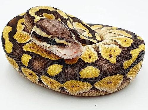 Pastel Butter