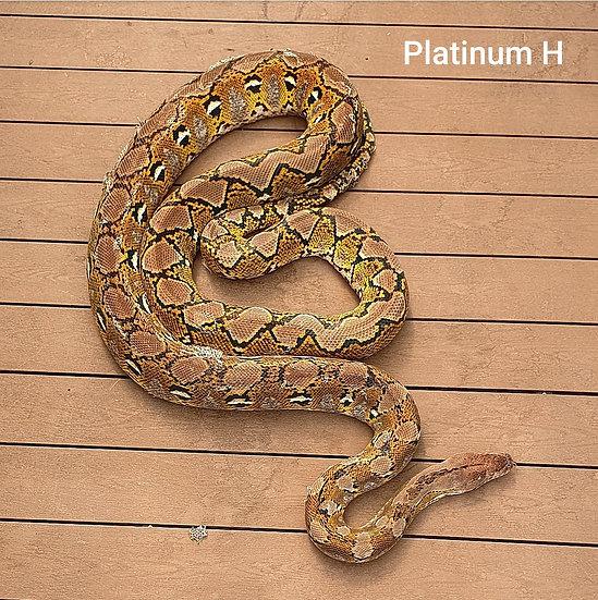 Platinum H 30,520 kg