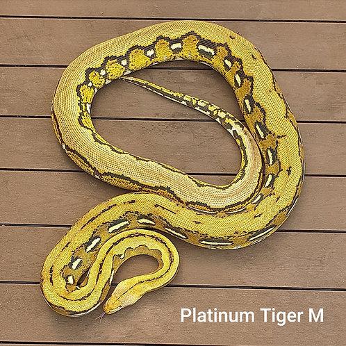 Platinum Tiger M