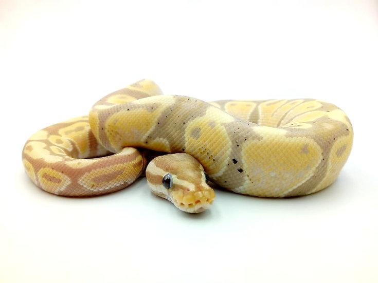 Banana (M) 275 gr