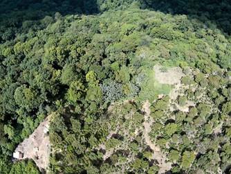 """100 Hectareas reforestadas en el """"El Triunfo"""" Poligono III"""