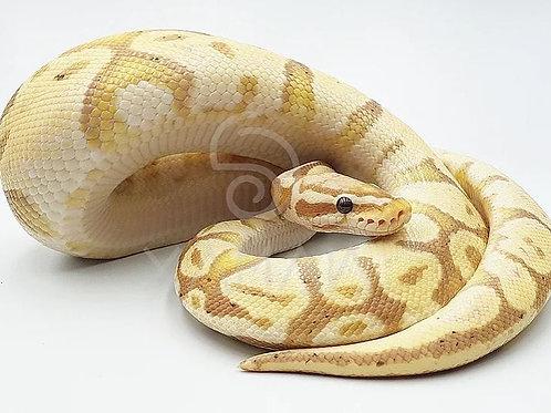 Banana Pastel