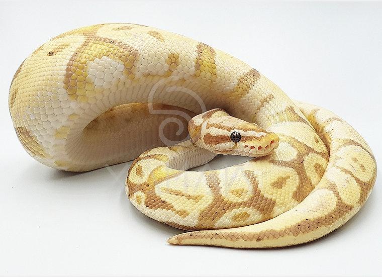 Banana Pastel M