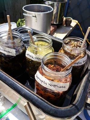 What are Natural Dyes?