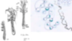 Sketch b3.jpg