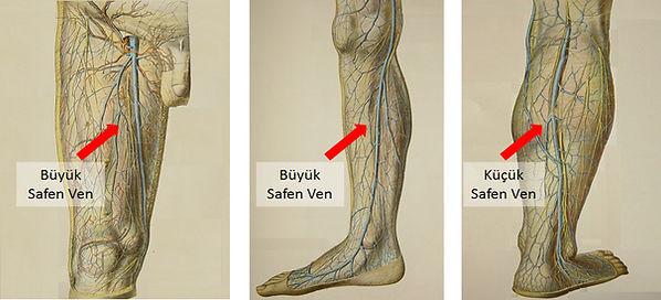 Yüzeyel sistemdeki ana damarlarımız büyük safen ven ve küçük safen venlerdir.