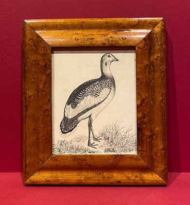 19th Century Pencil Sketch of a Grouse