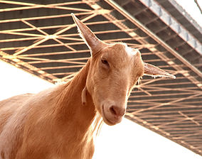 PhillyGoatProject_03_March_02_edited.jpg