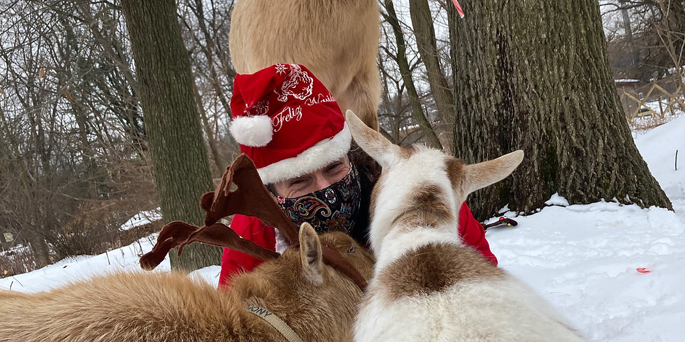 January 9th Christmas Tree-Cycle