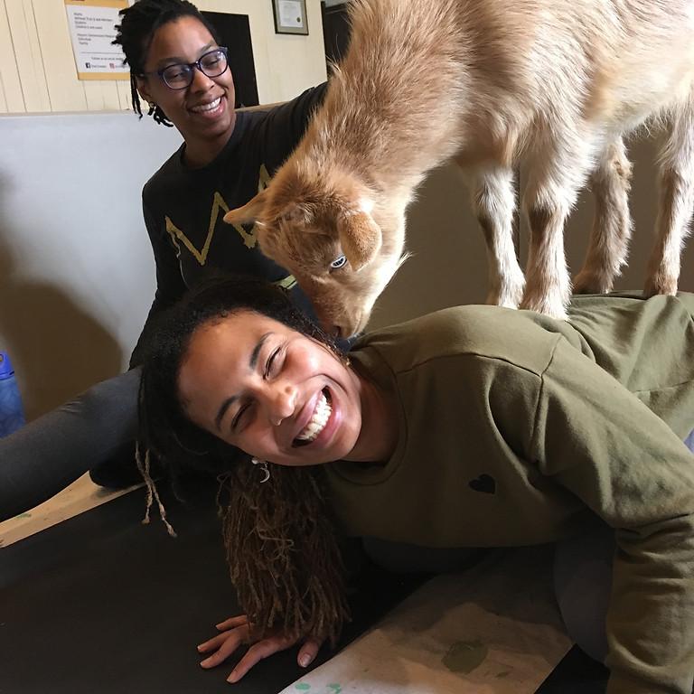 Goat Yoga at West Laurel Hill: October 17th
