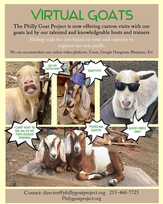 Virtual Goat meeting many goats.jpg